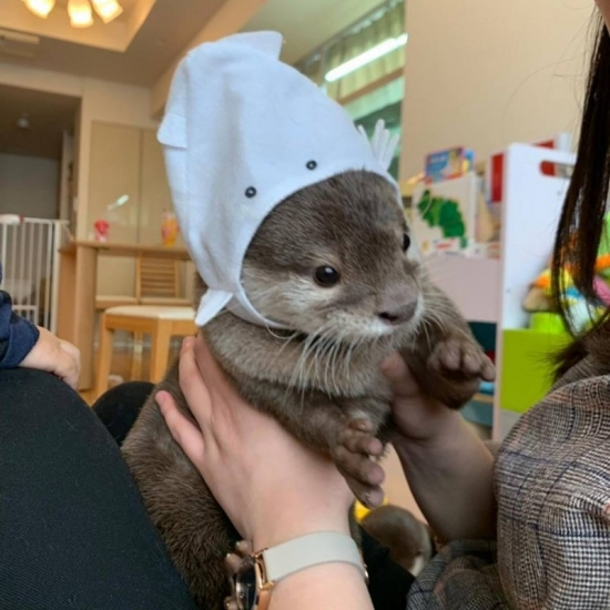 ADORABLE ASIAN SMALL-CLAWED OTTER